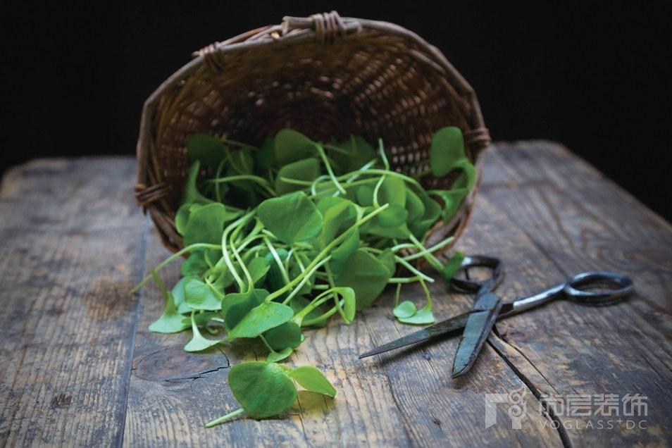 尚层装饰别墅生活野生蔬菜