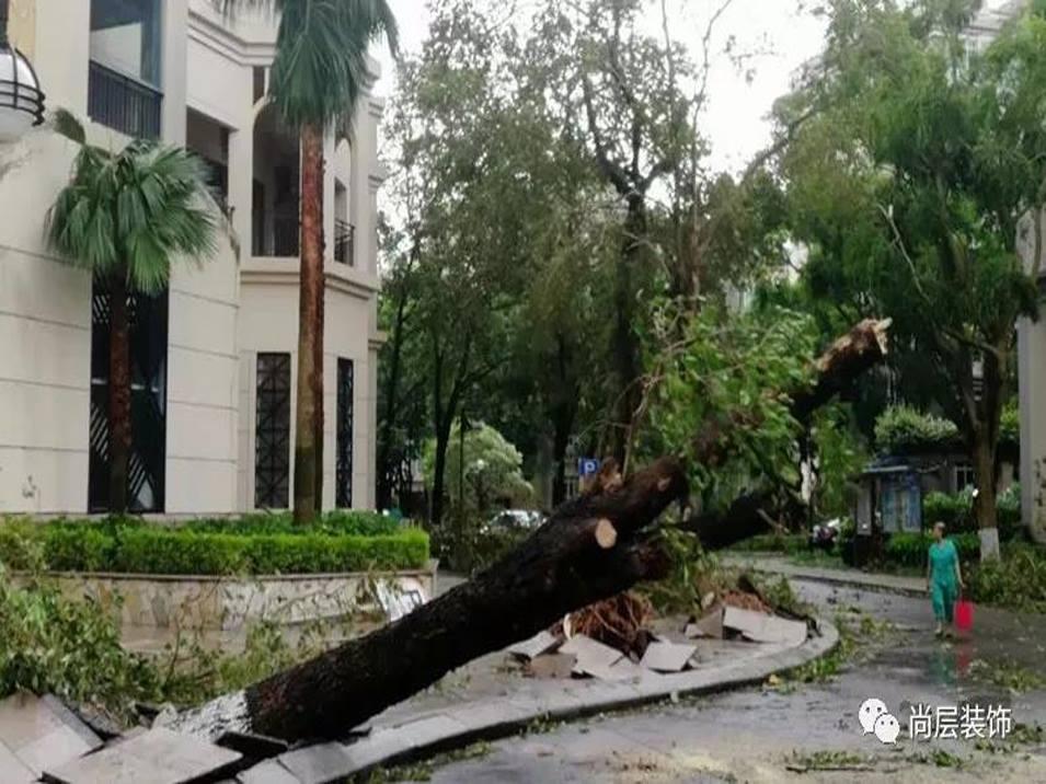 """台风""""山竹""""已经走远,尚层的服务仍在继续"""